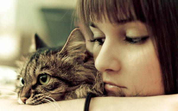 Несмотря на множество проведенных исследований, ученые до конца не выяснили психологию взаимоотношений кошки и человека
