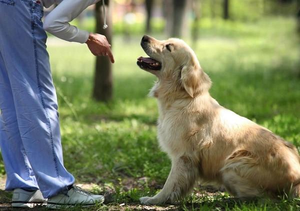 """Как научить собаку команде """"Лежать!"""""""