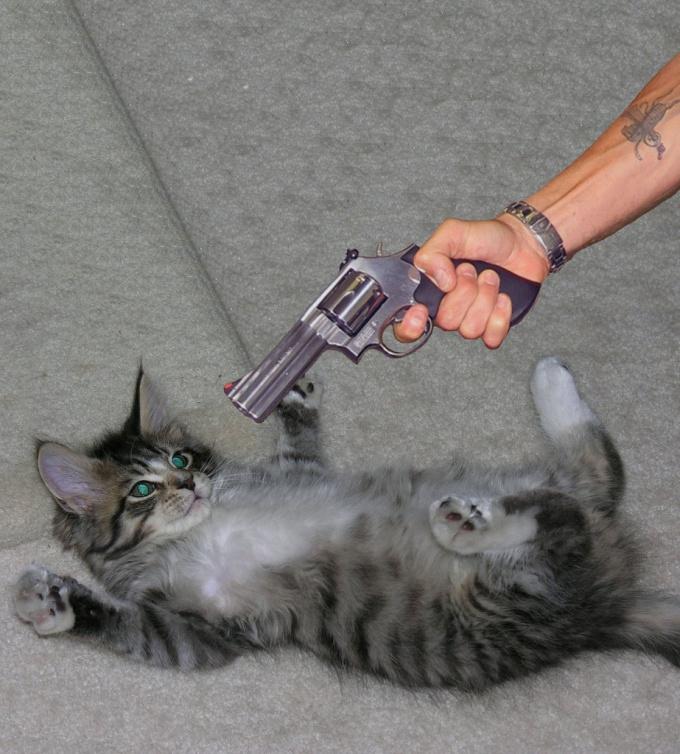 Ругать кота бесполезно