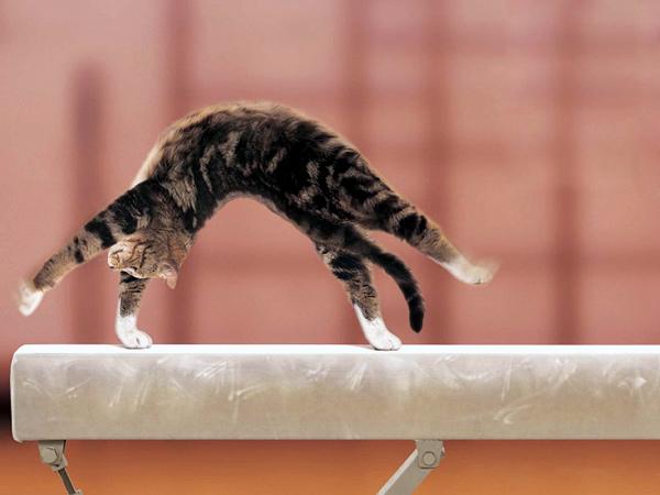 Коты успешно поддаются дрессуре