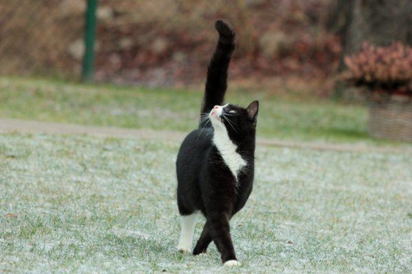 По природе кошки не склонны к ожирению