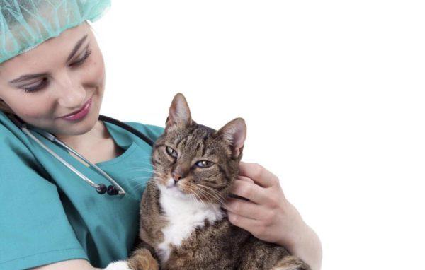 Все перечисляемые в тексте препараты могут быть использованы только в дозировке, назначаемой ветеринаром