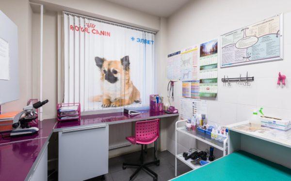 Найденную бездомную собаку необходимо отвести в ветеринарную клинику