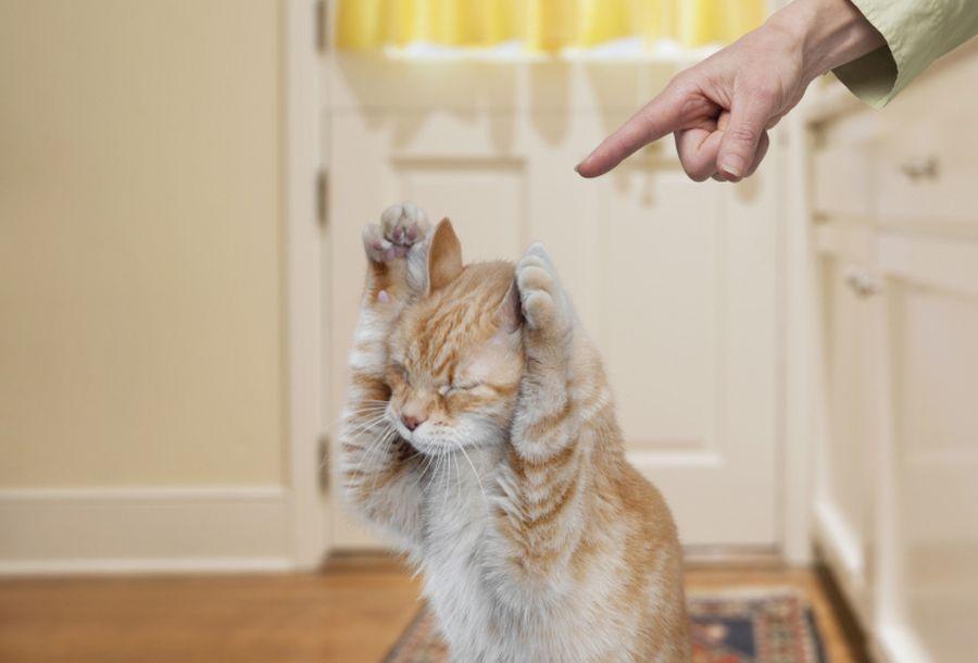 Воспитываем шкодников как наказать кошку вне зависимости от возраста правильно
