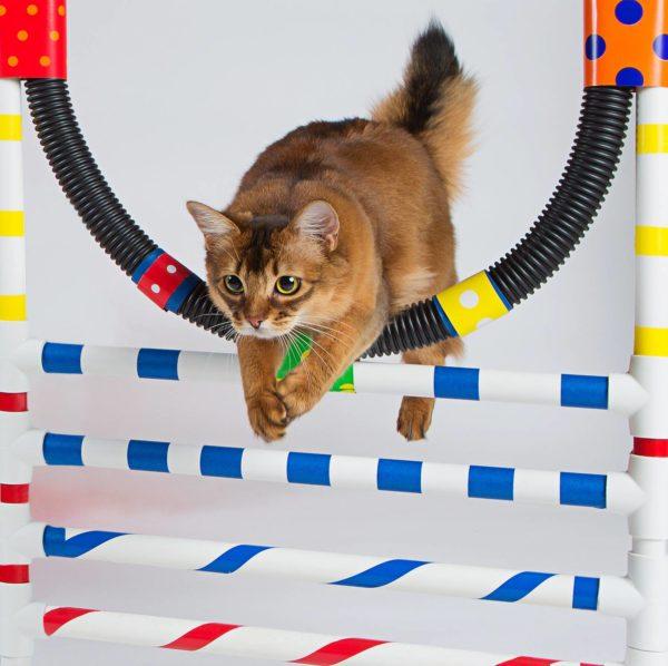 Гиперактивных животных можно научить прыгать через обруч