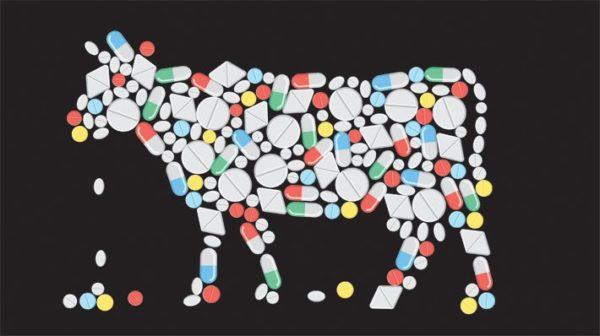 На щитовидку собаки может повлиять кормление мясом, содержащим гормоны