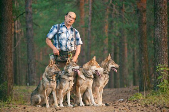 Семейство волкособов