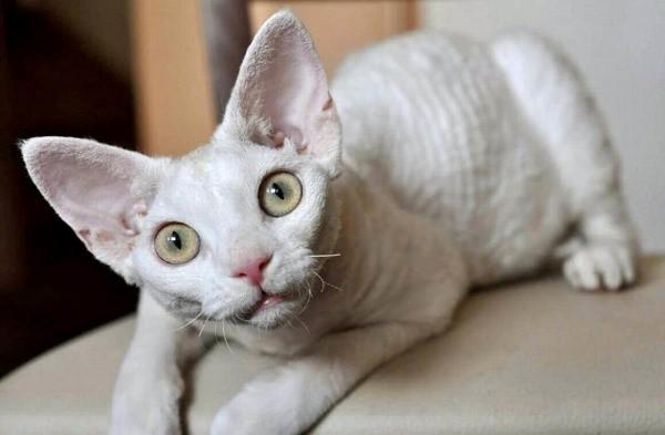 Чтобы защитить кота от общих для одомашненных представителей семейства кошачьих заболеваний, нужно вовремя делать ему прививки, а также проводить профилактику против эндо- и эктопаразитов