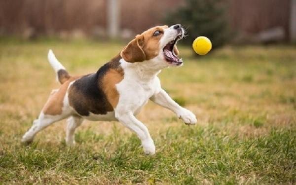 Только после изучения интересующих нас в данном разделе команд можно с уверенностью сказать, что собака готова перейти на новую ступень обучения