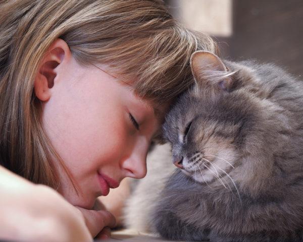Кошачий гепатит не опасен для человека