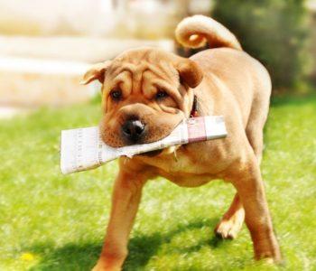 Реакции собаки отличаются от человеческих