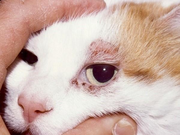 Демодекоз - заболевание весьма мучительное