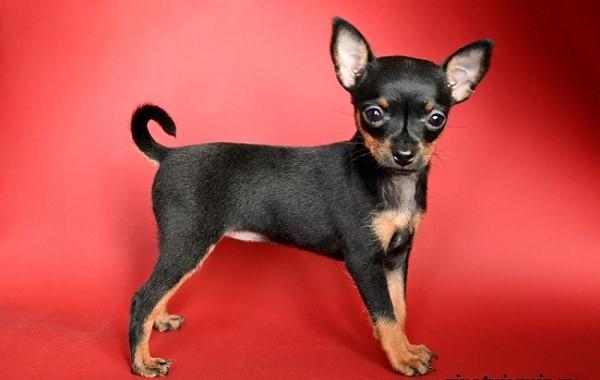 Прежде чем начать давать собакам прозвища, позаботьтесь о том, чтобы они привыкли к их изначальному имени