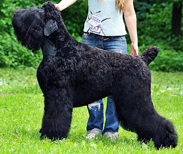 Собака перед нами действительно, как любят говорить в России, складная: всем удалась!