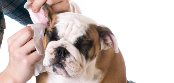 Чистка ушей является обязательным гигиеническим мероприятием