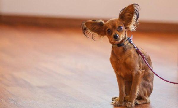 Ежегодное посещение ветклиники полезно и собаке, и владельцу – для спокойствия
