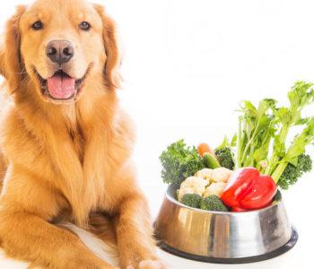 Несмотря на приведенные факты и отсутствие многокамерного желудка, в небольших количествах овощи собакам необходимы