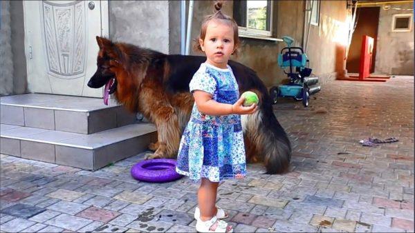 Социализация – важнейшая часть воспитания собаки