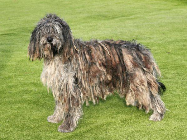 Фурминатор не подходит для собак, шерсть которых завита в жгуты