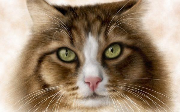 При нормальной работе всех систем организма кошка кушает с удовольствием