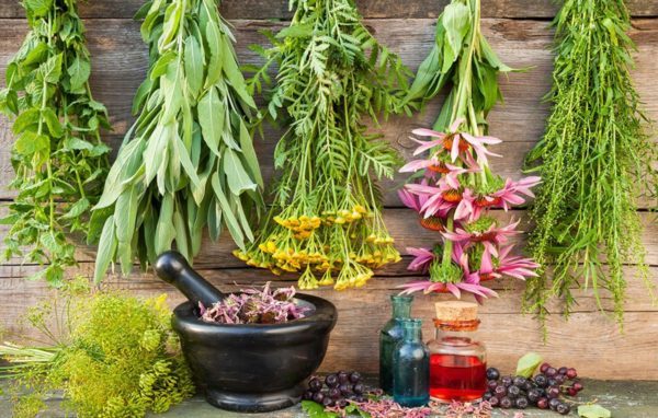 Терапия травяными отварами возможна лишь в качестве дополнительного лечения