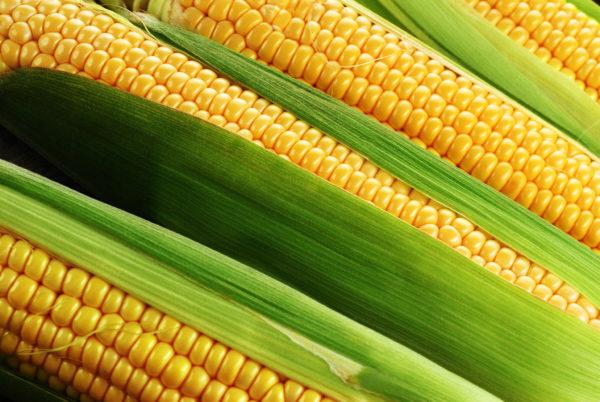Не желательно включать кукурузу в рацион питомца