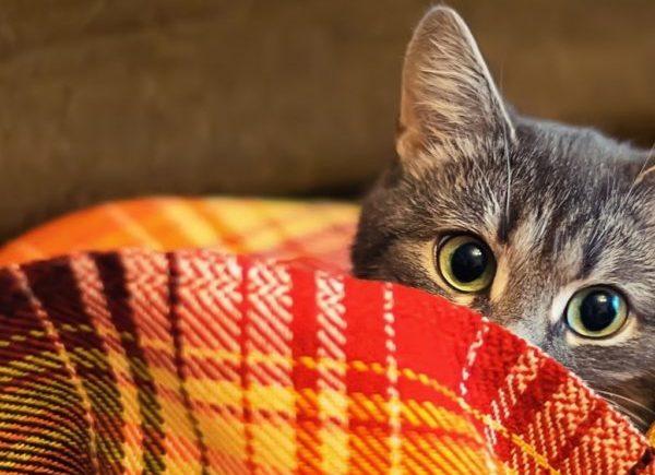 В некоторых ситуациях укутывание в одеяло может оказаться эффективным