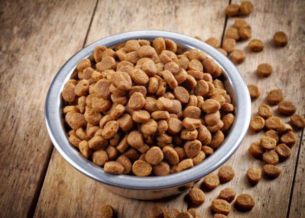 Попадание сухого корма в гортань часто становится причиной смерти питомца