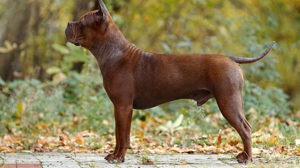 Для поддержания шерсти собаки в хорошем состоянии можно использовать специальный крем