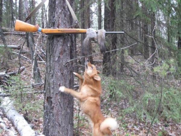 Итоги охоты на белок