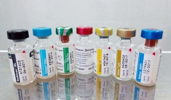 Нобивак - одна их вакцин, использующихся для профилактики заражения кота панлейкопенией
