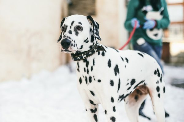 При выявлении признаков болезни нужно обращаться к ветеринару
