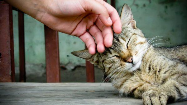 Ласка и внимание — лучшие помощники в борьбе с неадекватным поведением питомца