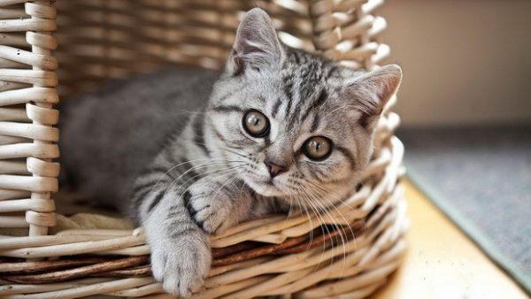 Общее состояние кошки – индикатор здоровья