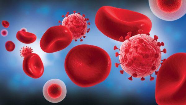 К смертельному исходу приводит не вирус, а вырабатываемые дефектные антитела