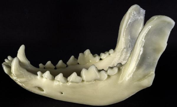 Деформация челюсти — одно из последствий запущенного флюса