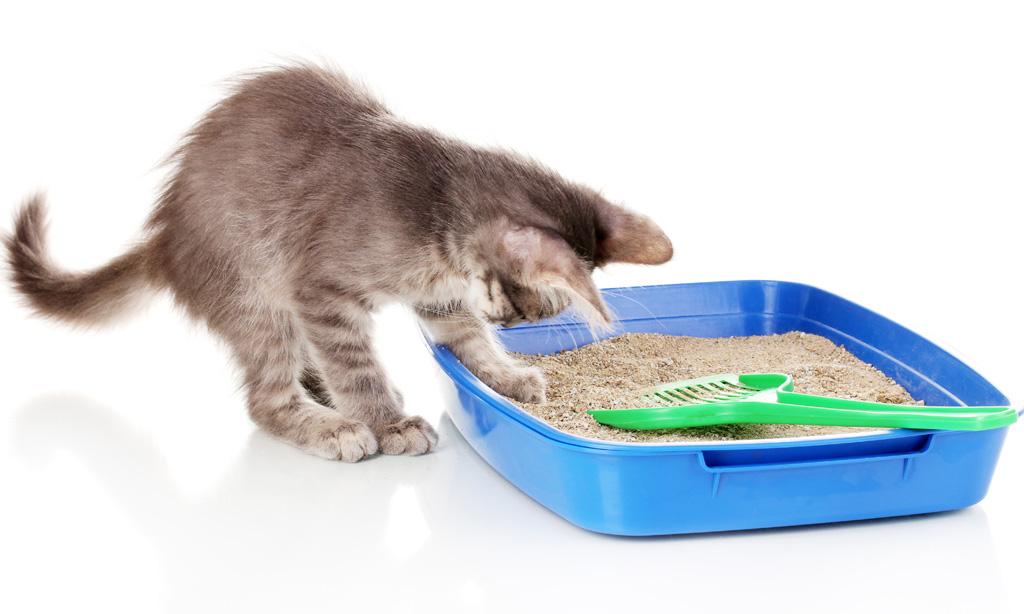 привить кошке эКошке надо привить элементарные навыки — научить ходить на лоток