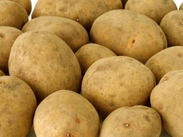 Сырой картофель считается бесполезным продуктом для кормления собак