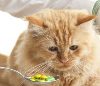 Достаточно однократной практики, чтобы уверенно давать животному таблетку при необходимости