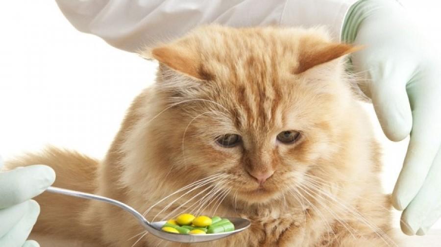 Как дать кошке таблетку чтобы она не выплюнула