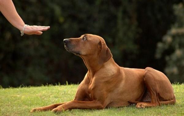 Принуждение вовсе не означает, что вы должны бить собаку или ругать ее. Нет, все должно подаваться крайне мягко