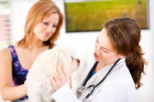 Осмотр у ветеринарного врача поможет либо подтвердить, либо опровергнуть ваши подозрения