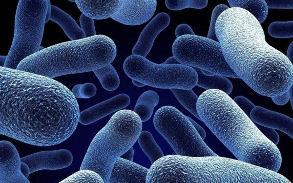 При цистите болезнетворные микробы способствуют образованию гнилостных бактерий в урине