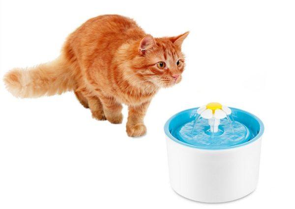Искусственный фонтан является эффективным средством для стимуляции чувства жажды