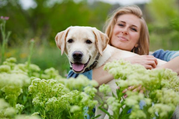 Возрастная собака способна изучить базовые команды