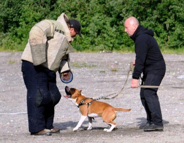 Противником собаки на ЗКС выступает фигурант в защитном костюме