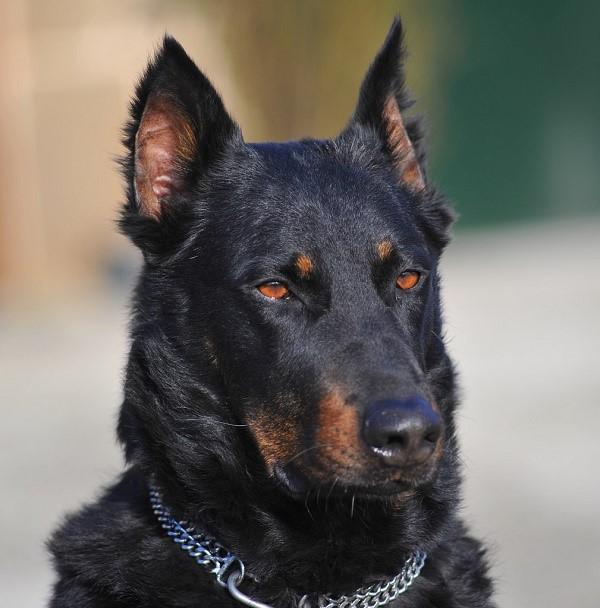 Лучший друг, член семьи, любимец - все это одна и та же собака