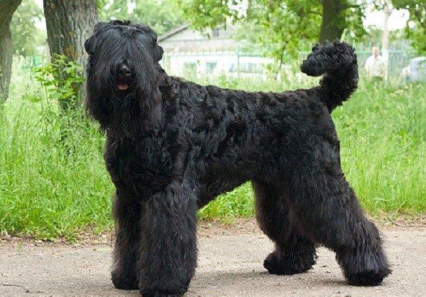 Грозное прозвище собаки описывает только одну половину ее характера