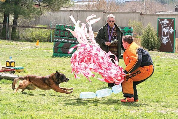 Мондиоринг – самый непредсказуемый для собаки вид спорта