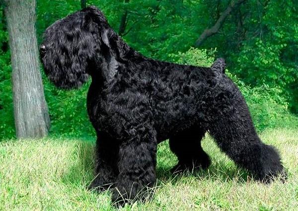 Чем лучше состояние шерсти собаки, тем интереснее и солиднее ее внешний вид